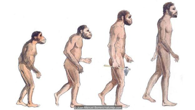 insanın evrimi