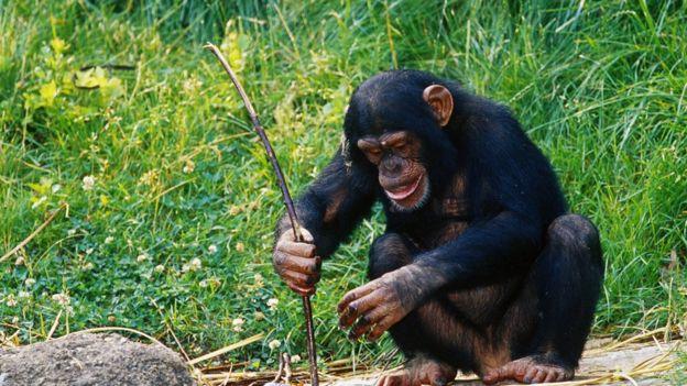 Nós humanos tradicionalmente enfatizamos nossas diferenças do reino animal, mas todos somos apenas o resultado de experimentos evolutivos. Crédito: Adam Jones/Science Photo Library