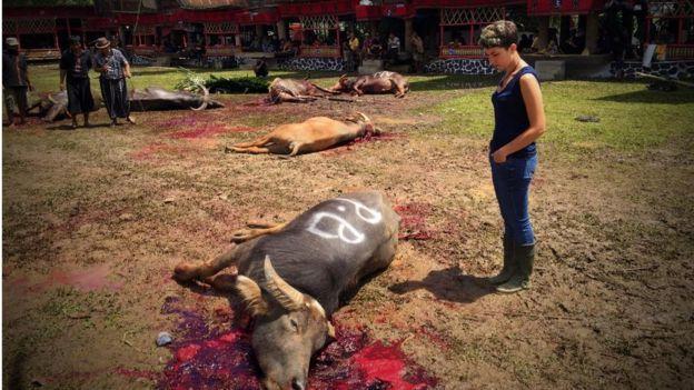 Búfalo morto