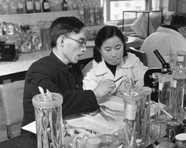 This photo taken in the 1950s and released by Xinhua News Agency on Monday 5 October 2015 shows Tu Youyou, right, a pharmacologist with the China Academy of Chinese Medical Sciences in Beijing, working with Professor Lou Zhicen to study traditional Chinese medicine