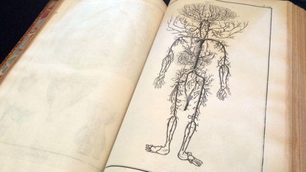Anatomía de Diderot