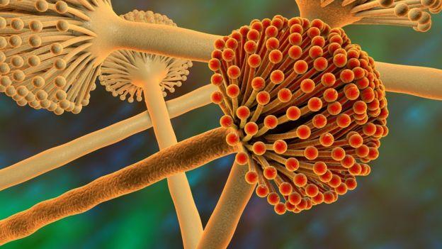 Illustration of fungus of the genus Aspergillus,