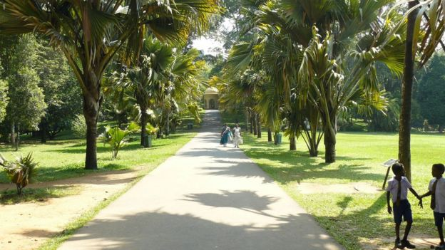 Peridiniya Botanic Garden in Sri Lanka