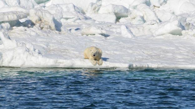 Urso polar sobre bloco de gelo