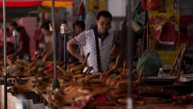 Homem observa cães à venda em barraca