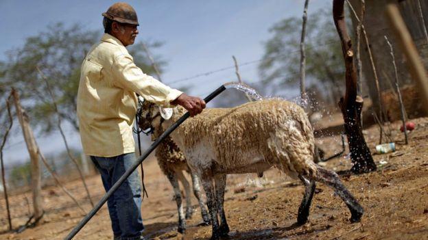 Trabalhador rural na Paraíba