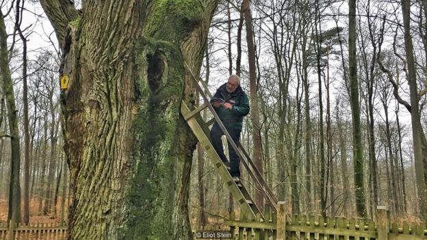 Martens na escada da árvore