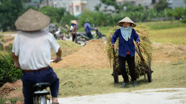 'Trong quá trình thực hiện chủ trương 'người cày có ruộng' năm 1953-1956 ở miền Bắc Việt Nam, tỷ lệ người bị oan sai khoảng 71,66%.' (Hình chỉ có tính chất minh họa).