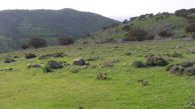 Grassy hills on Agios Efstratios, 2010 (pic courtesy of Stella Spanou)
