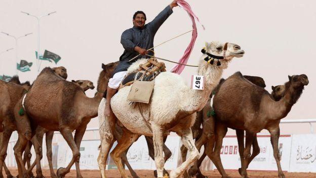 deve yarışması