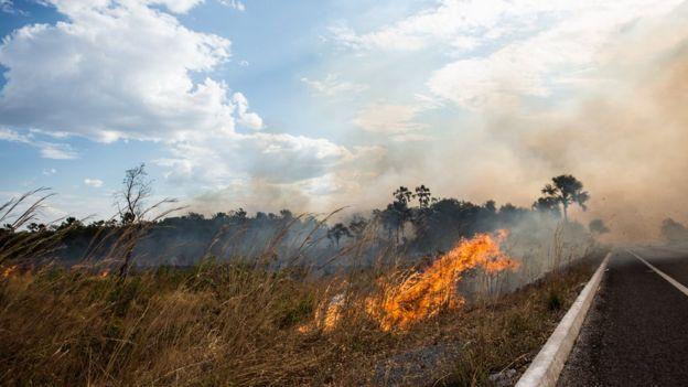 Incêndio na beira de rodovia em Goiás
