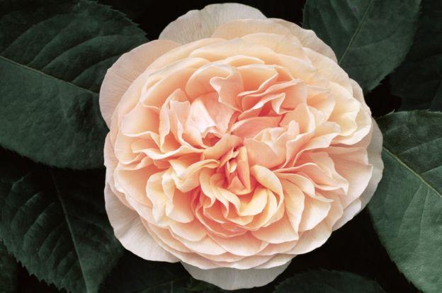 5 de las flores ms raras hermosas y hasta peligrosas del mundo