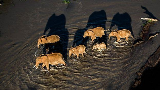 Elefantes en la reserva Loisaba Conservancy