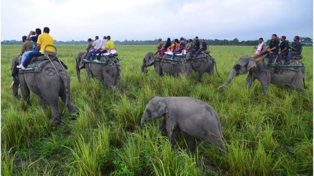 Baby elephant follows its mother as tourists go on an elephant safari on the opening day of the Kaziranga National Park in Bokakhat district of northeastern Assam state on October 1, 2016.