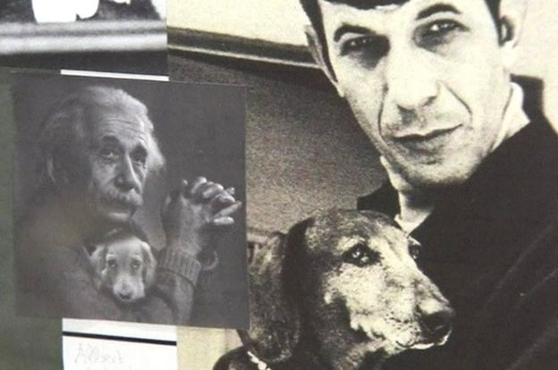 Famous dachshund owners, shown in museum