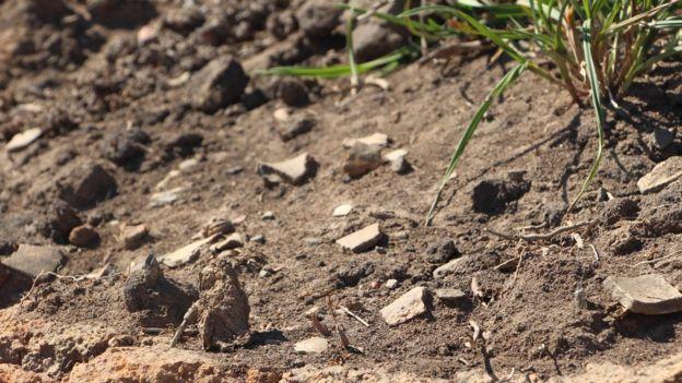 Fragmentos arqueológicos em terra preta, removidos pela terraplanagem