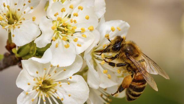 Por qué es tan cara la miel de manuka que está tan de moda en el mundo