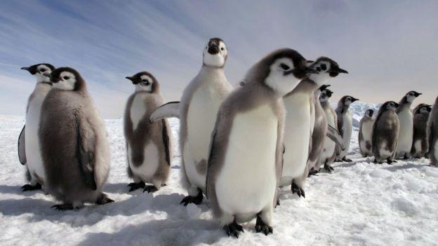南極的企鵝
