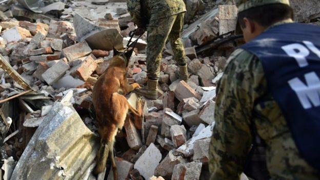 Los efectivos militares, trabajando con perros en Juchitán de Zaragoza.