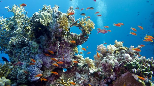 Un arrecife de coral