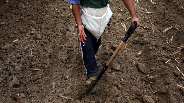 Un agricultor en Perú
