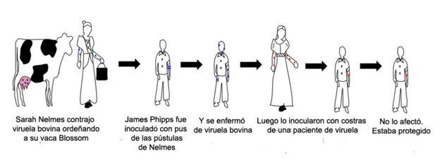 Gráfico del proceso para comprobar la protección que daba inocular con viruela bovina