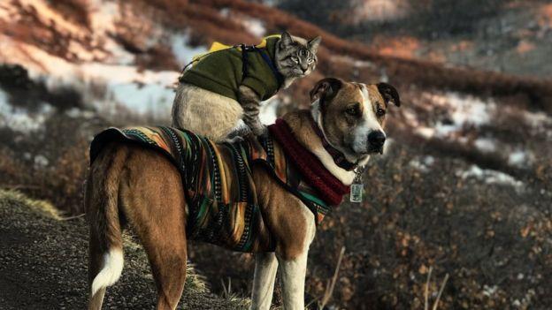 El perro se coloca encima del paisaje montañoso con el gato encima de él