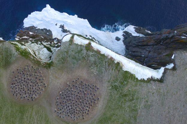 Colônia de pinguinas na ilha Heroina