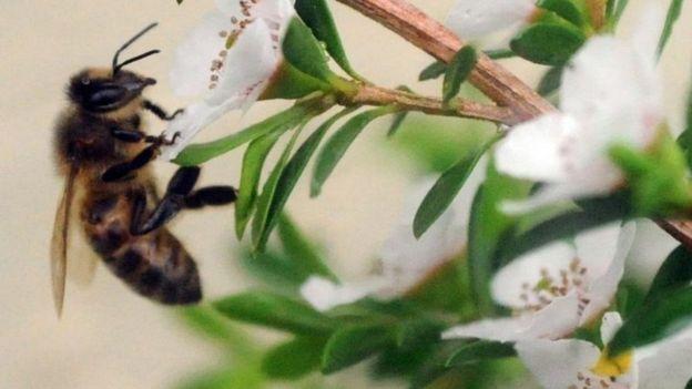 کاهش حشرات بالدار 'به مرز هشدار رسیده است'