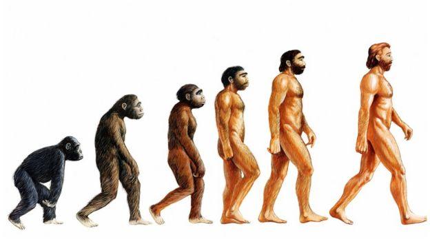 В Турции из школьных учебников выбросили теорию эволюции