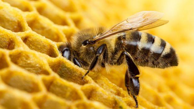 Abeja dejando néctar
