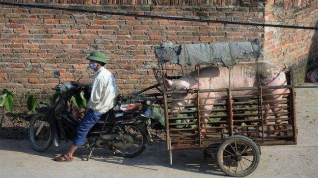 Nông dân Việt Nam