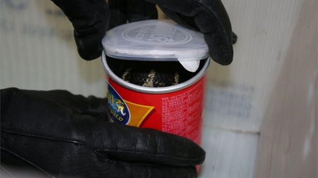 A king cobra snake seen in a container of chips in this undated handout photo.