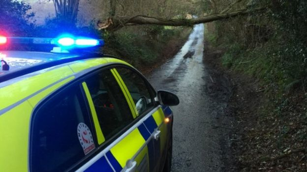 Dorset tree down