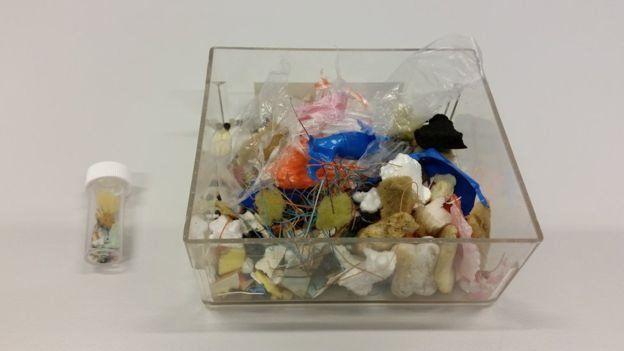 Objetos de plástico hallados en el estómago de un petrel Foto Lucy Quinn