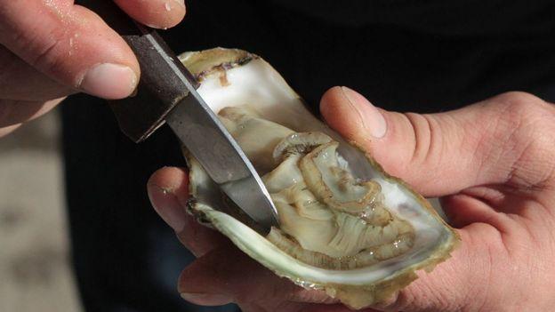 Oyster shucking (file image)