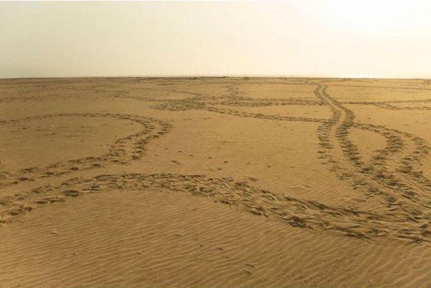 The arribada nesting beach with turtle tracks