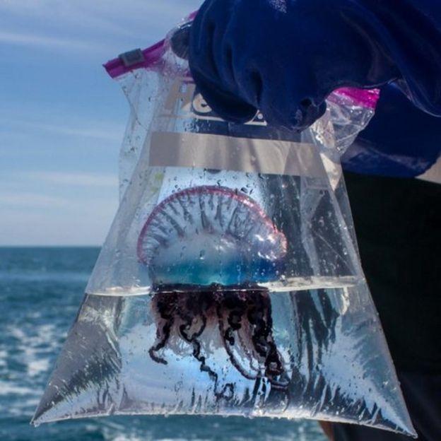 El mejor tratamiento para la picaduras de medusa | Ecuavisa