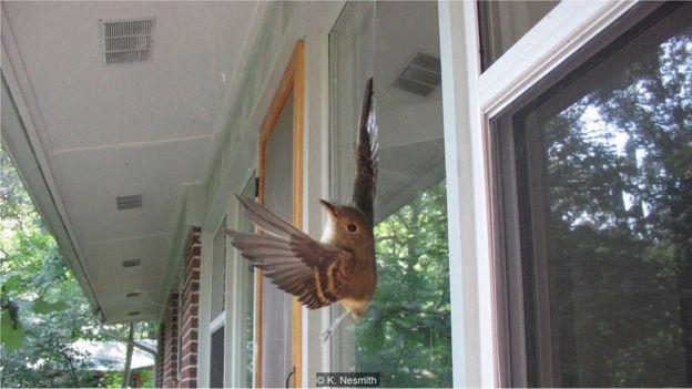 Pássaro preso em teia