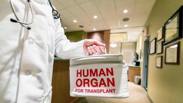 Nevera con órgano para transplante.