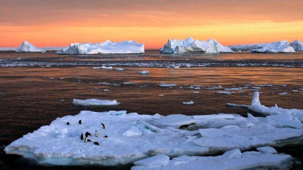 Preocupación genera muerte masiva de pingüinos en la Antártica — Desastre medioambiental