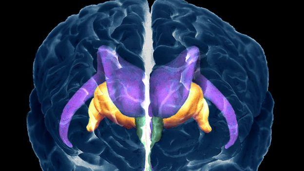 Ilustración de las estructuras del cerebro humano