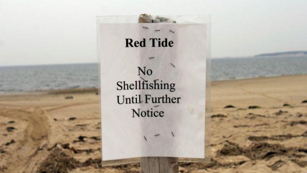 Alerta de marea roja