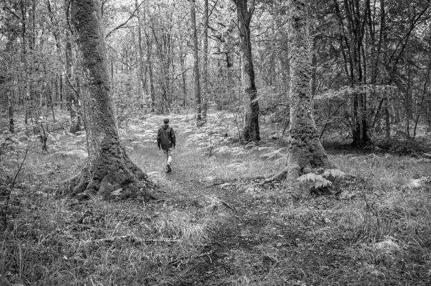 A man walking alone in a wood