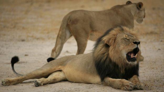Cecil el león
