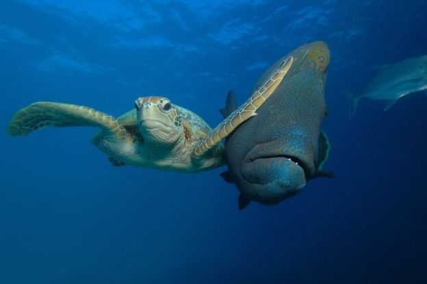 Turtle slapping a fish. Photo: Troy Mayne