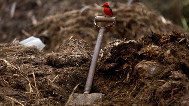 Una pala en un terreno de cultivo peruano