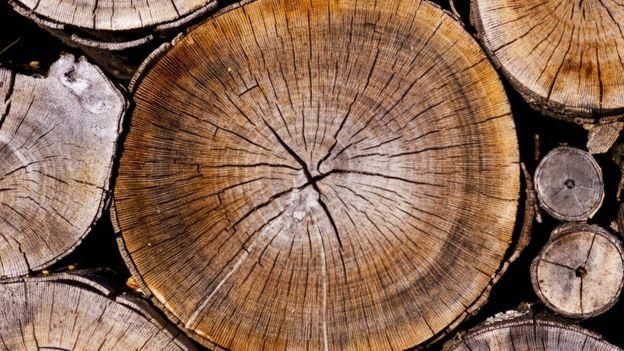 Los anillos de varios troncos