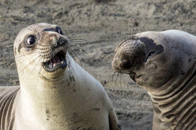 Seals Photo: George Cathcart.