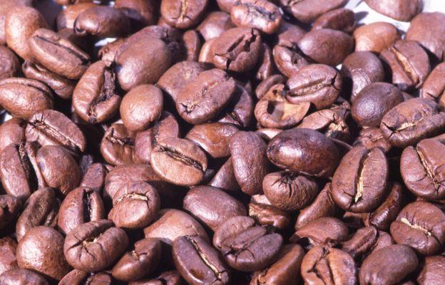 Café no Brasil